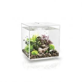 The BiOrb Cube Aquarium is a complete all-in-one package that features everything you require to get setup quickly and easily. The BiOrb Cube Aquarium Includes:  LED Lighting Three Colour Options. Black, White and Clear. Air Pump: The Air Pump with Air Stone provides your aquarium with plenty of aeration, helping to create an Oxygen rich environment for your beloved fish.