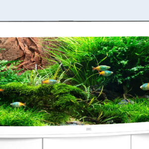 No aquarium embodies this characteristic as well as the VISION 450 LED. With its curved front panel, outstanding height and four-lamp LED lighting, this aquarium creates an extra-special setting. The safety base frame ensures especially safe positioning and allows you to set up your aquarium easily, with no need for special supports. Painstaking workmanship from Germany, top-quality materials and perfectly tuned technology guarantee the very best quality and safety, meaning a long service life for your VISION 450 LED. Choose from black, dark wood, light wood and white Brilliant luminosity and excellent plant growth are what you get with the state-of-the-art Multilux LED lightin