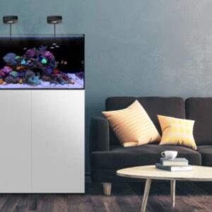 The Waterbox AIO series is an all-in-one aquarium with entry-level enthusiasts in mind. It provides a built-in filtration system in the back of the tank. This system eliminates the barrier to entry for saltwater or freshwater aquaria at a much lower cost.